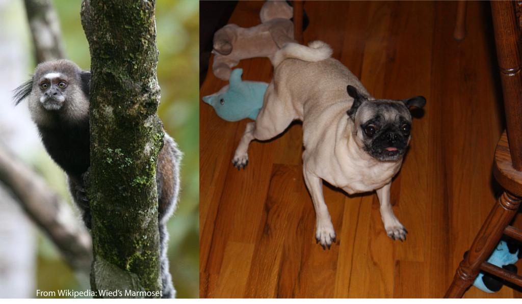 Origins of Pug5