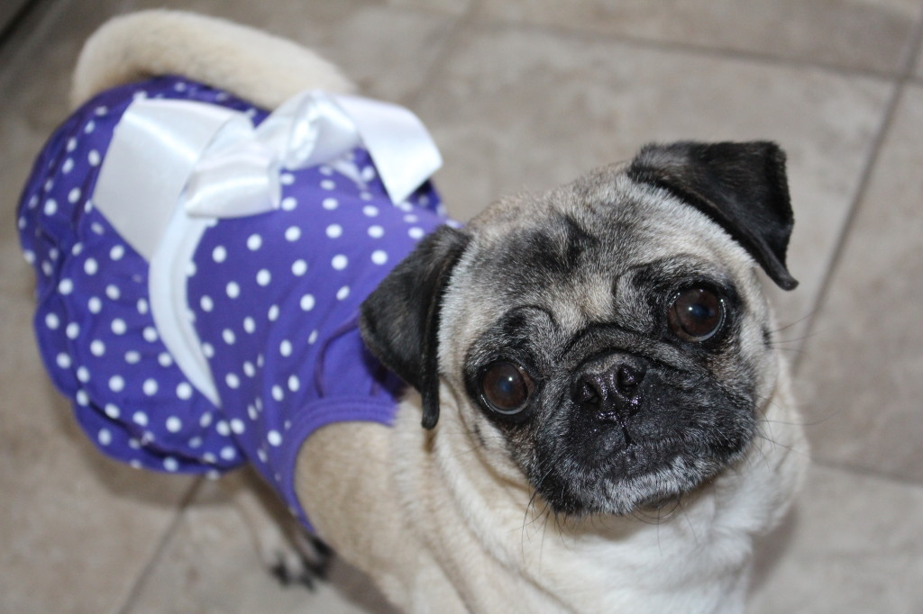 Happy Birthday Pug 1