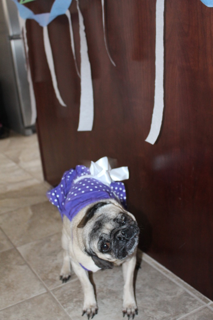 Happy Birthday Pug 4