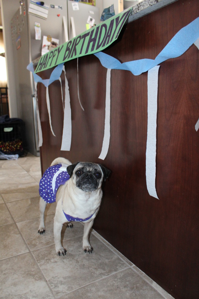 Happy Birthday Pug 5