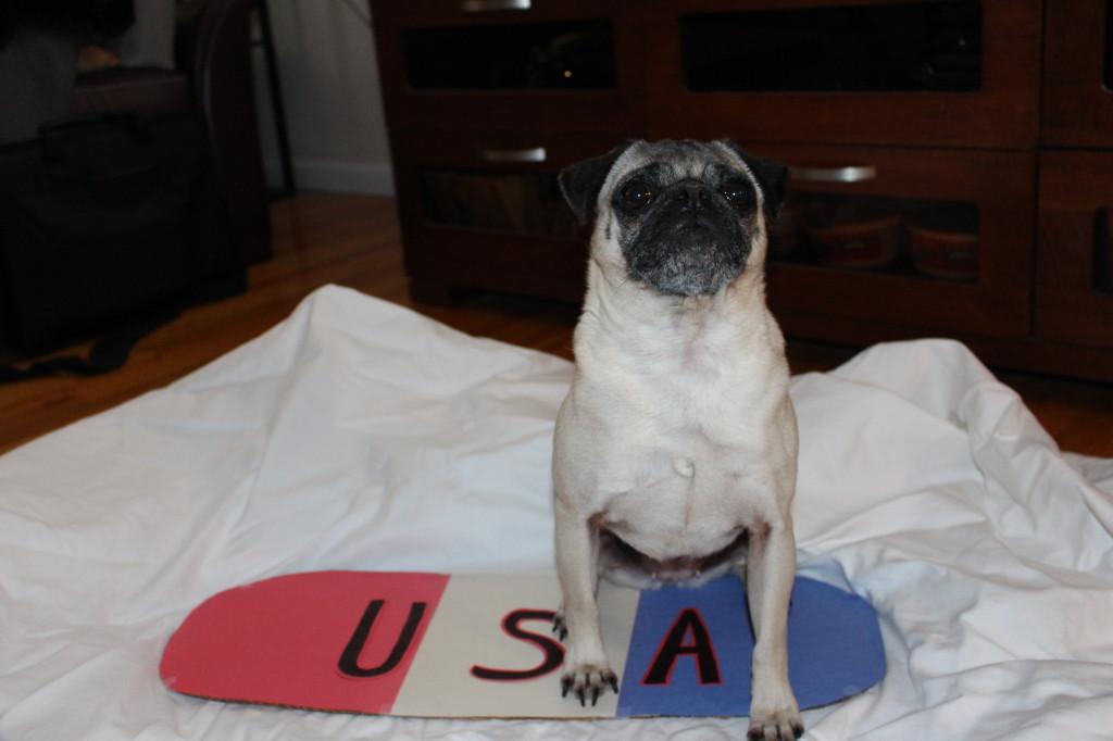 Olympic Pug 7