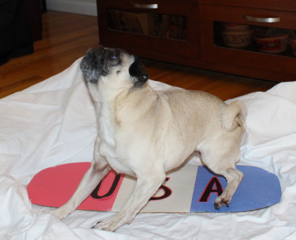 Olympic Pug 8