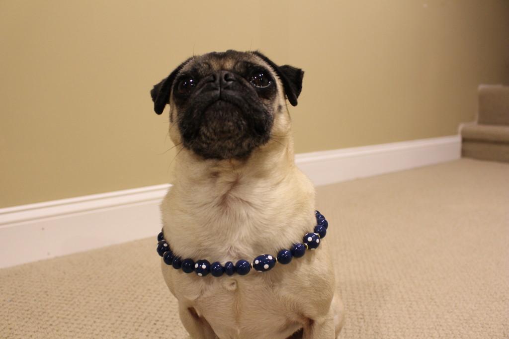 Pug Style3