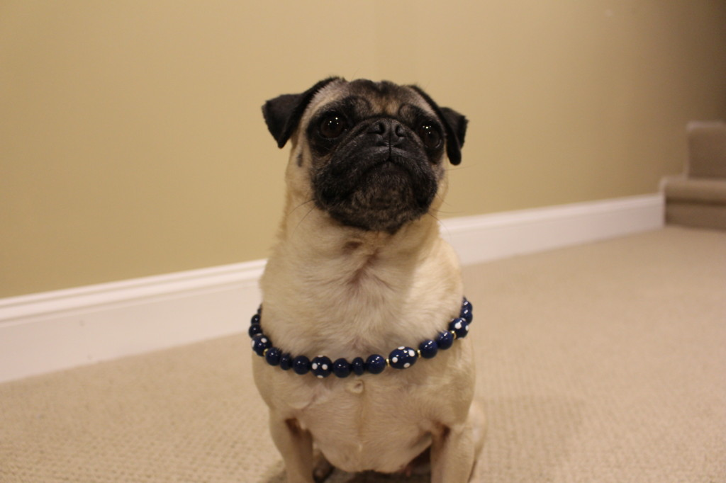 Pug Style5