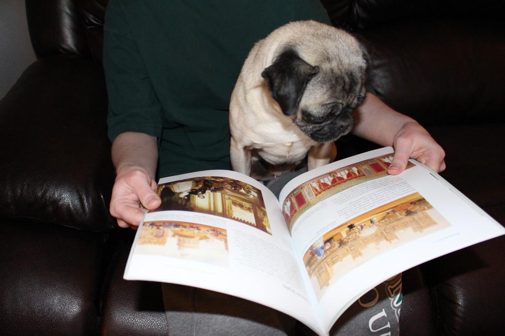 Reading Pug 1
