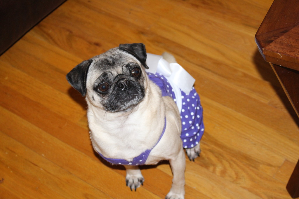 Sundress Pug 8