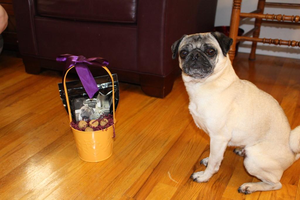 Easter Pug 6