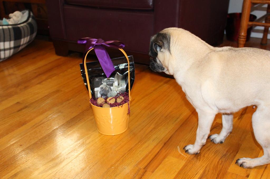 Easter pug 5
