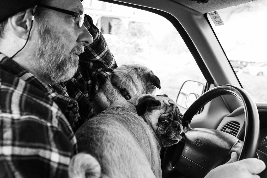 Top 5 Weekend Drive Pug 1