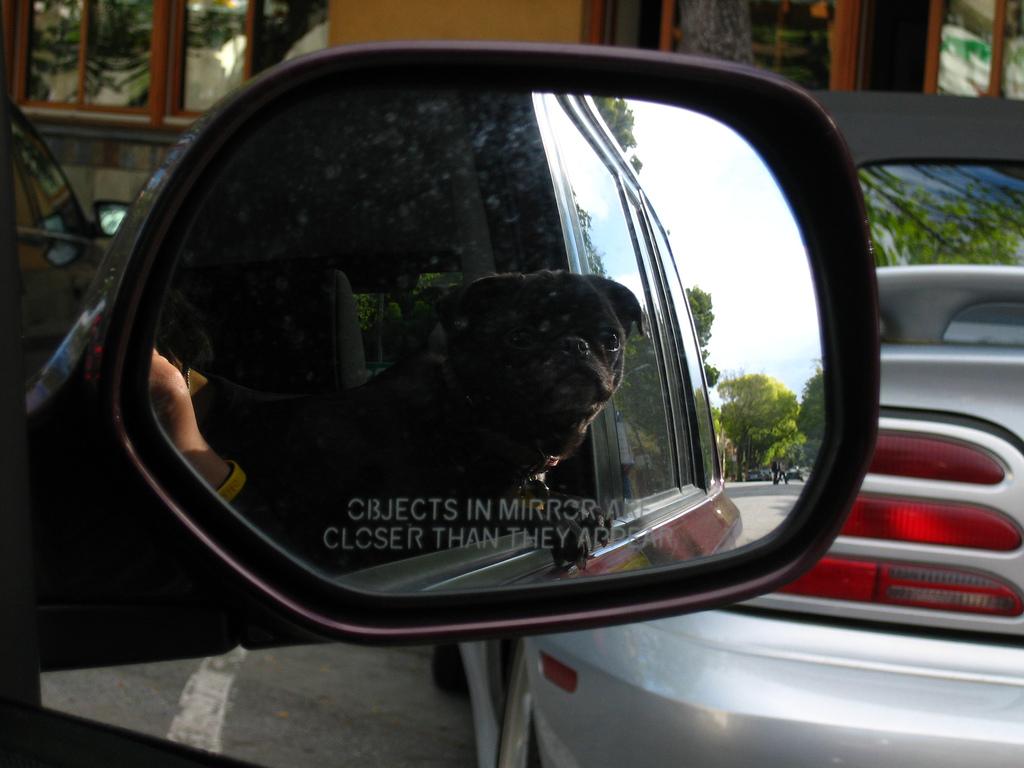 Top 5 Weekend Drive Pug 2