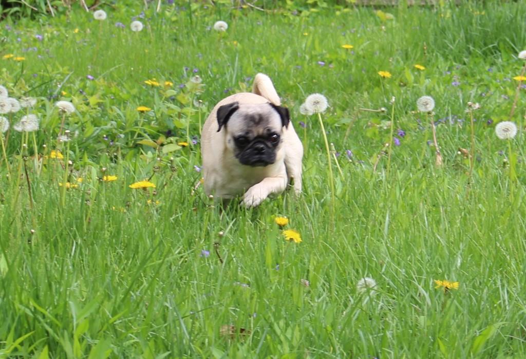 Adventure Pug 5