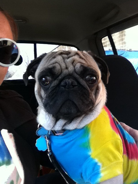 April Pug of the Month