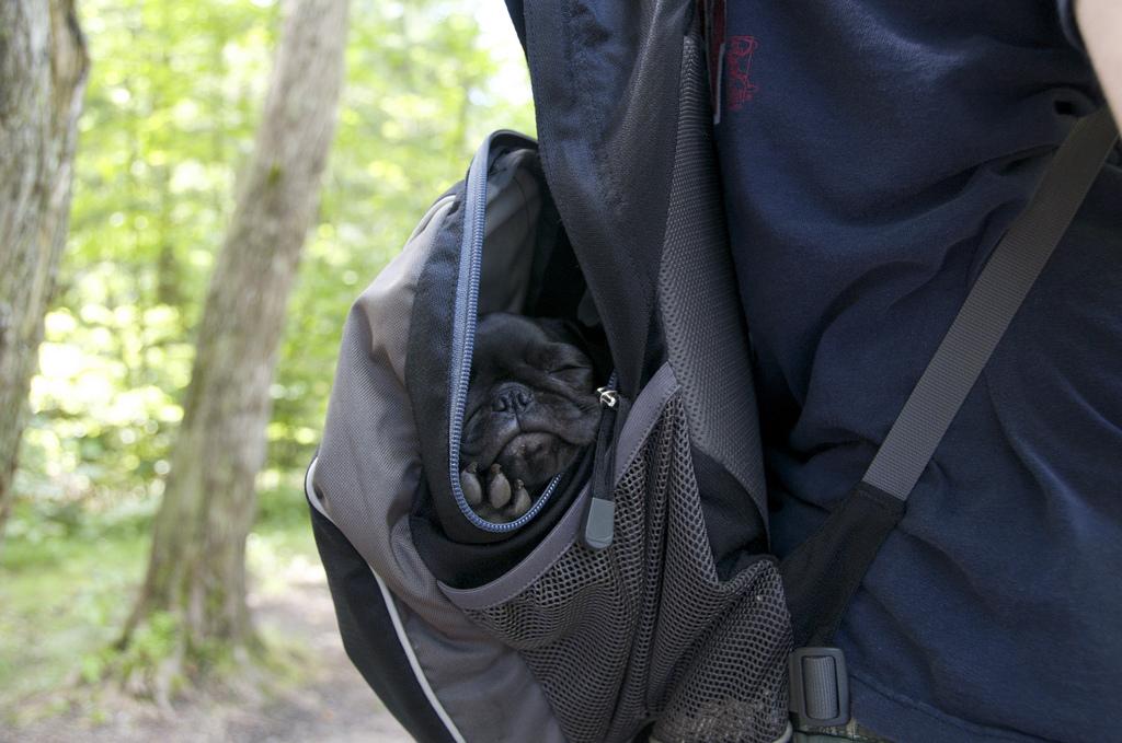 Portable Pug