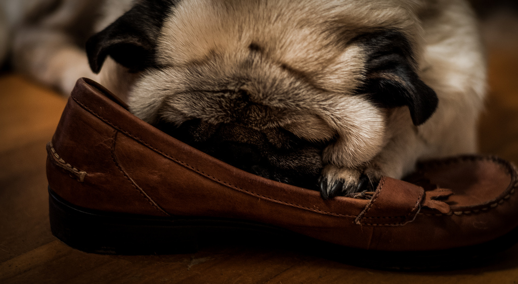Sometimes you Just need to take a break pug