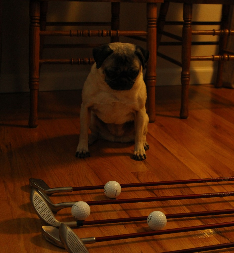 Fathers Day Pug 5