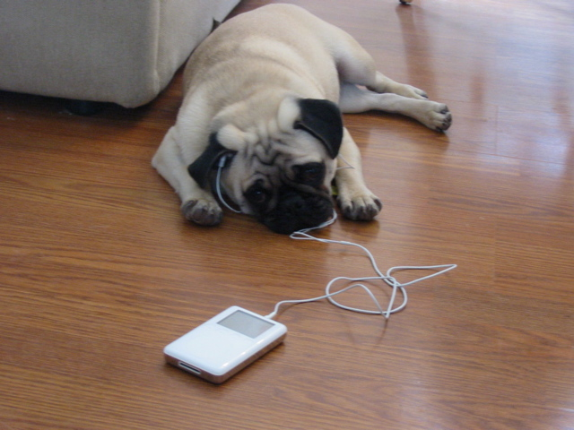 Party Jams Pug