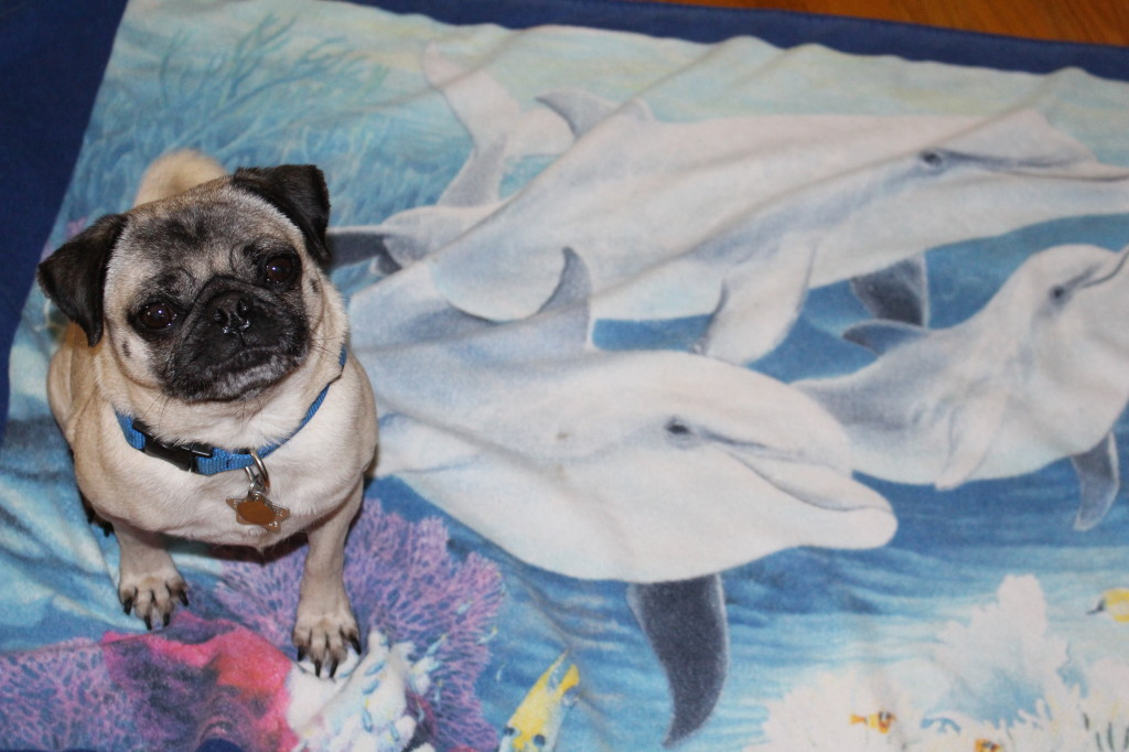 World Ocean Day Pug 1