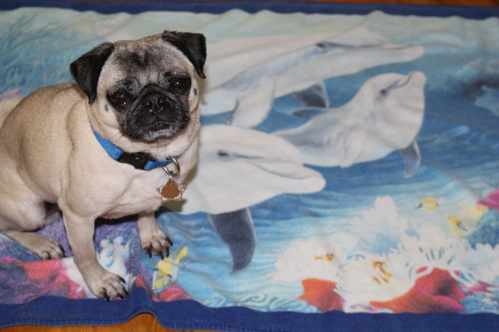 World Ocean Day Pug 2