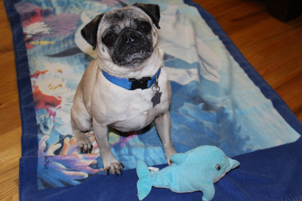 World Ocean Day Pug 6