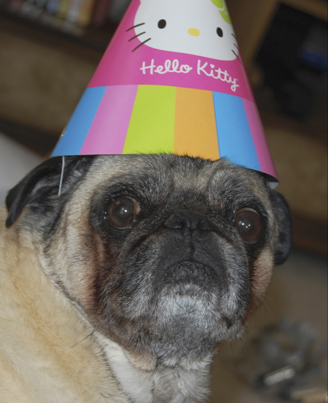 Grumpy Birthday Pug