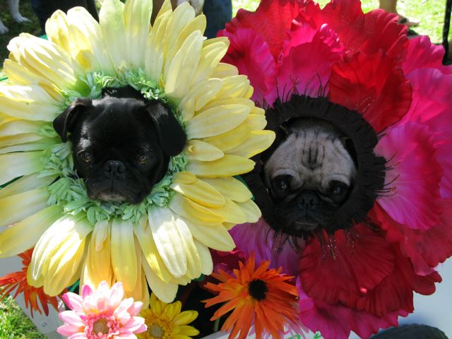 If Only Pugs Could Smell Like Flowers Too
