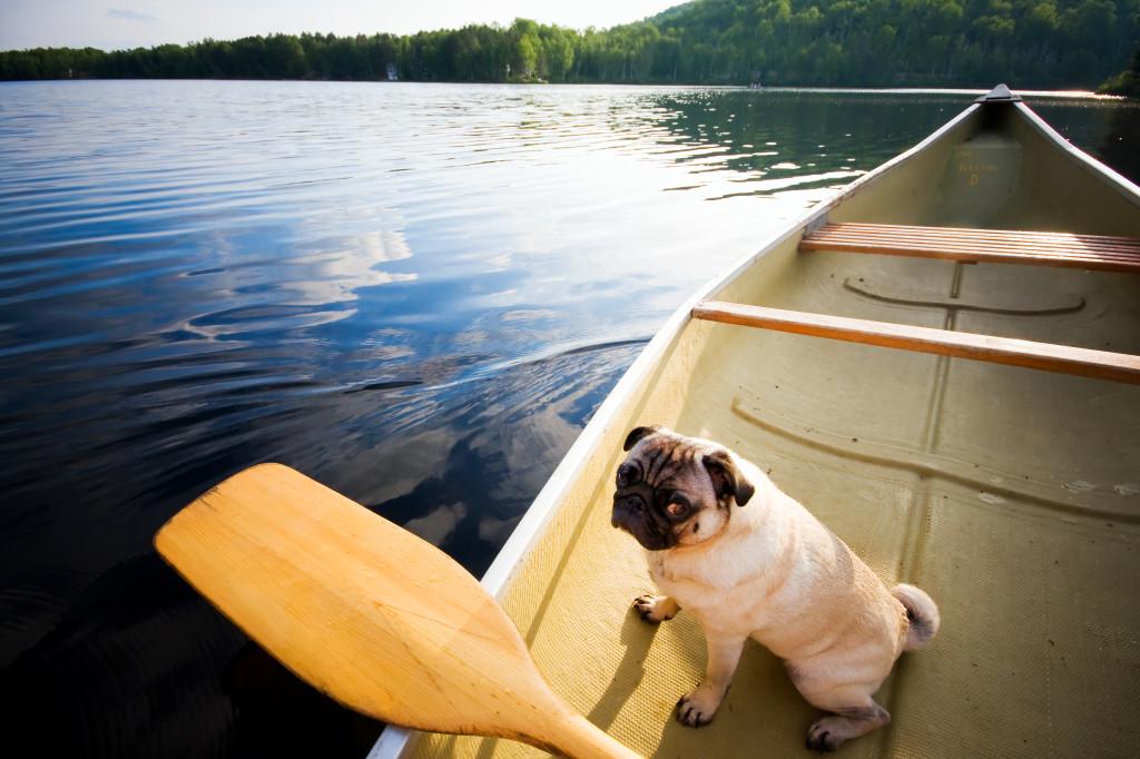 Pug Canoe