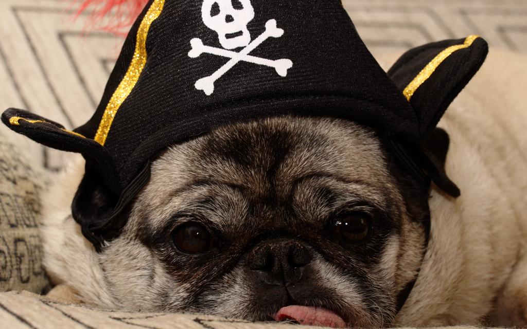 Pug Pirate 1