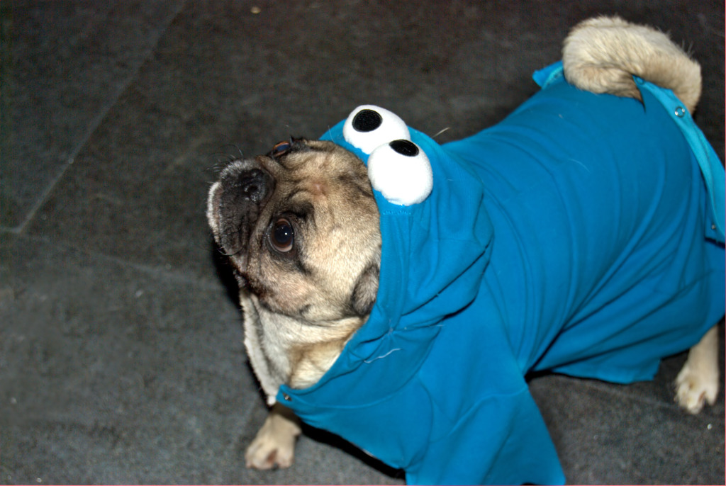 Cookie monster pug costume