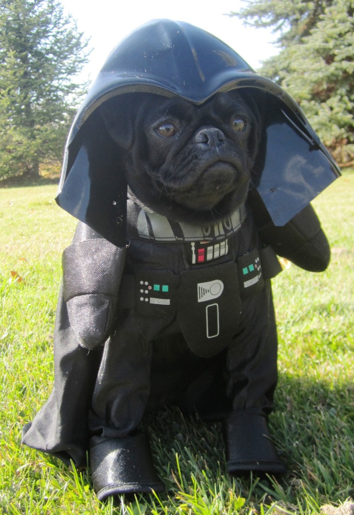 Darth Vader Pug Costume