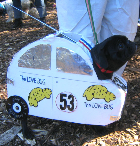 Herbie the love pug costume