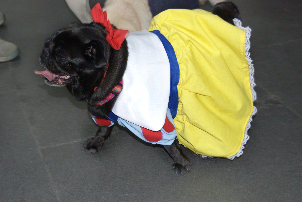 Snow White Pug Costume
