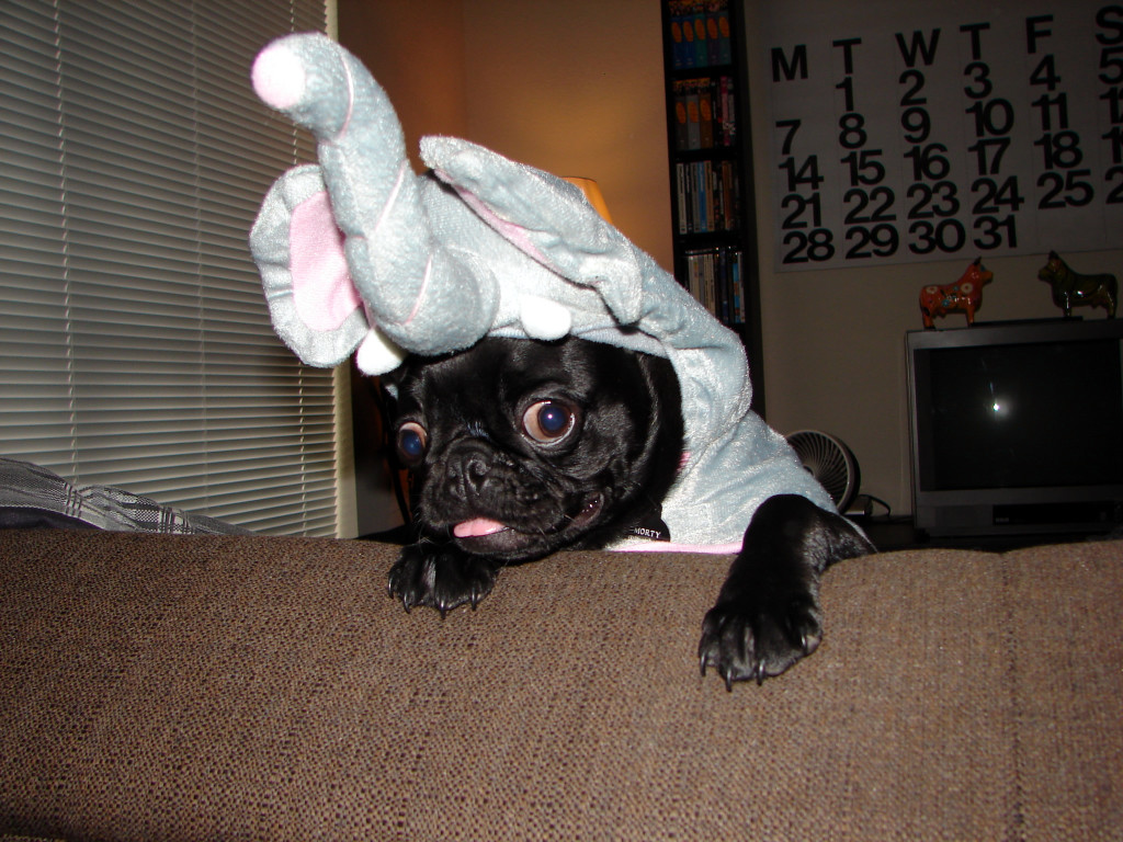 adorable pug in elephant costume