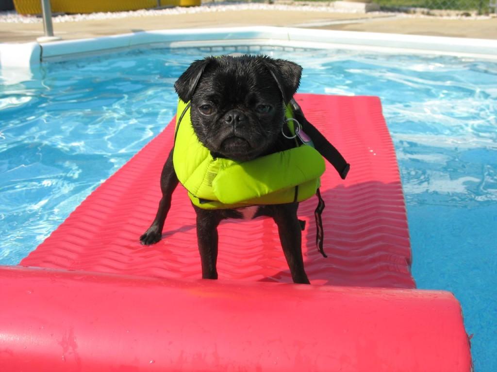 rafting cute pug