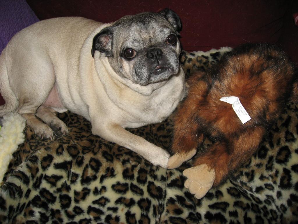 stuffed monkey and cute pug