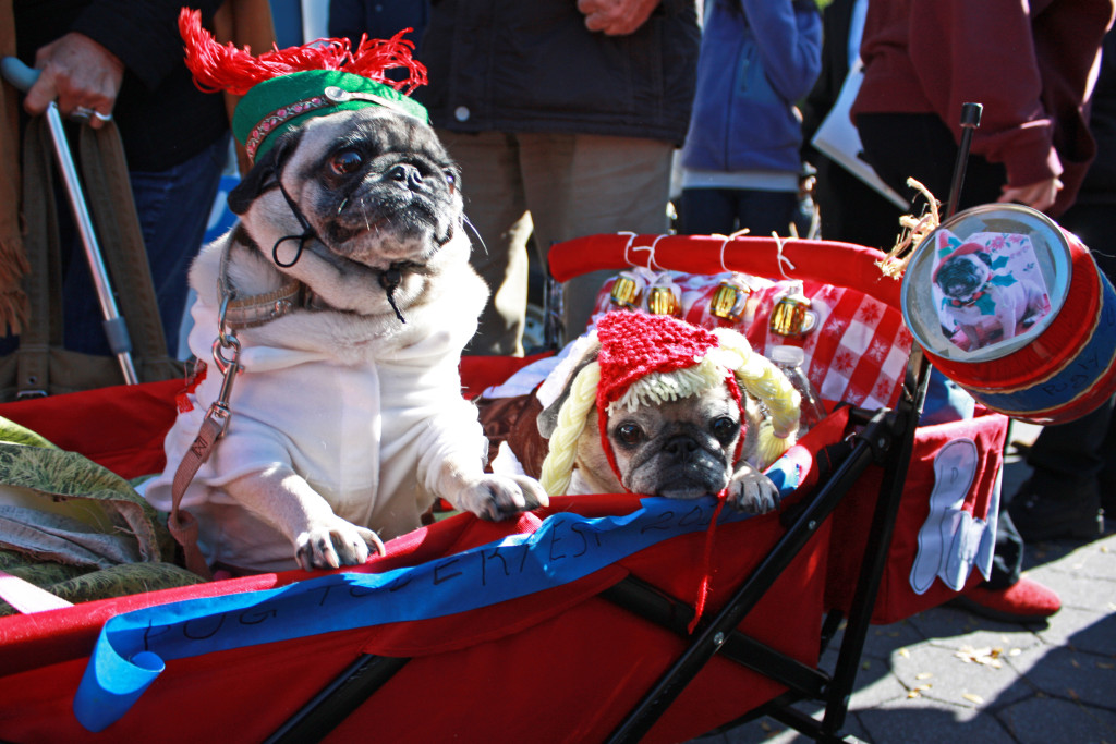 yodeler costume cute pugs