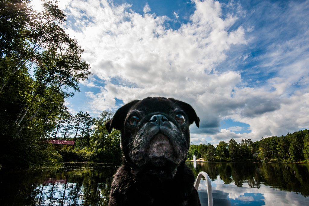 Cute-pug-at-the-lake