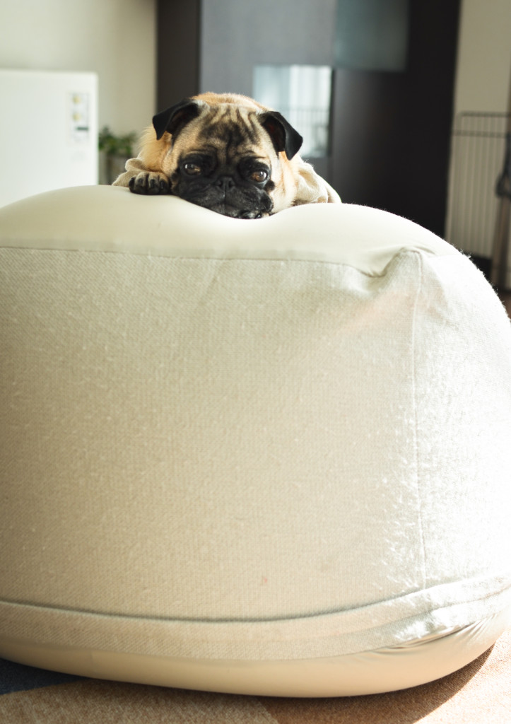 Pug-on-giant-cushion