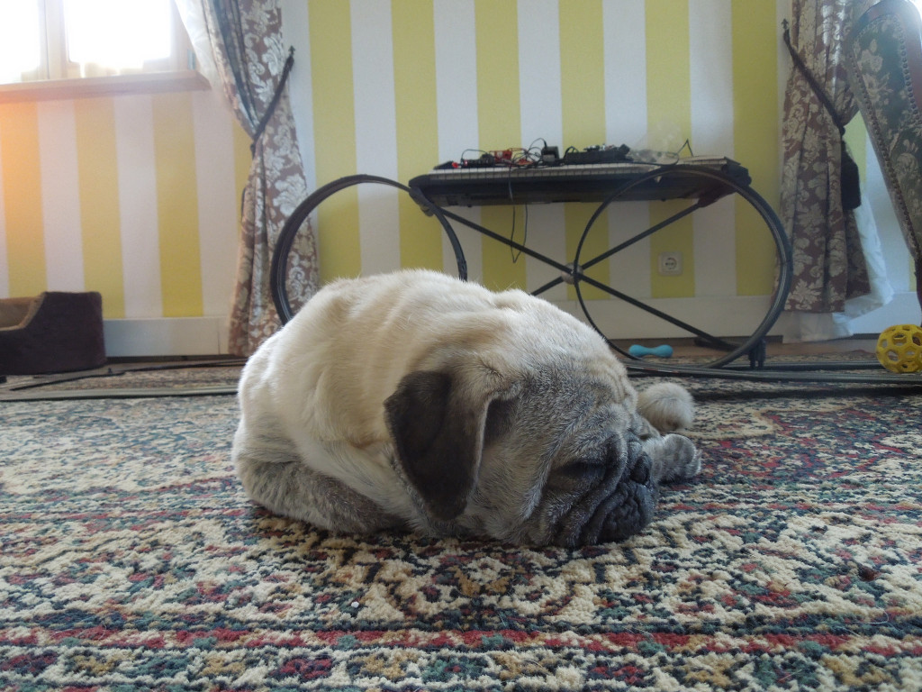 Sleepy-cute-pug-on-rug