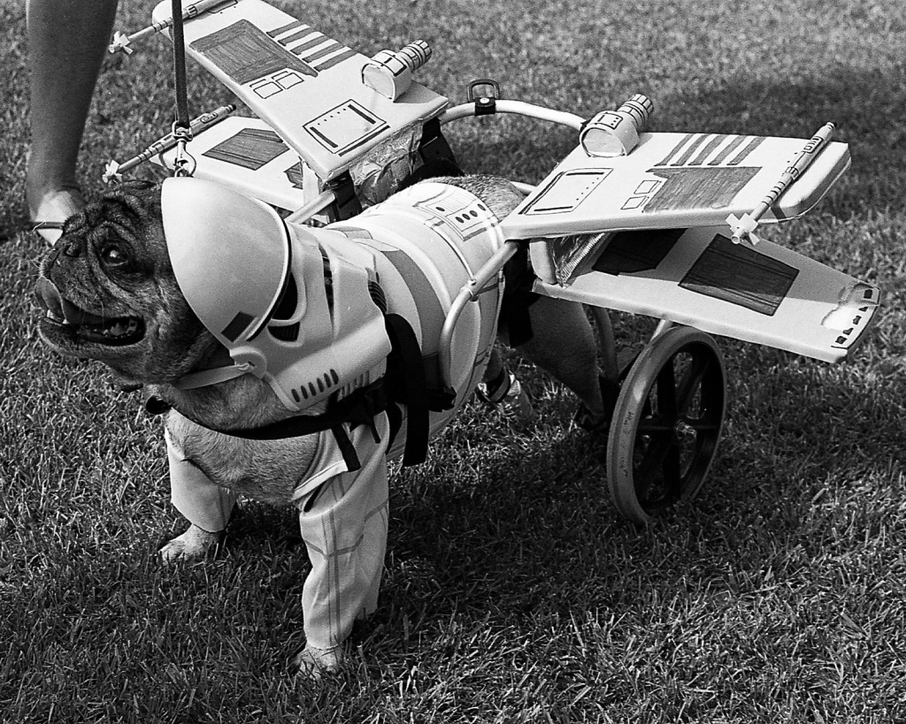 Ready for takeoff plane pug