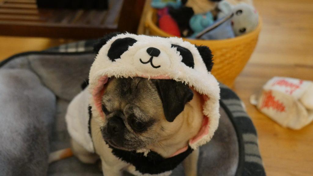 Panda Halloween
